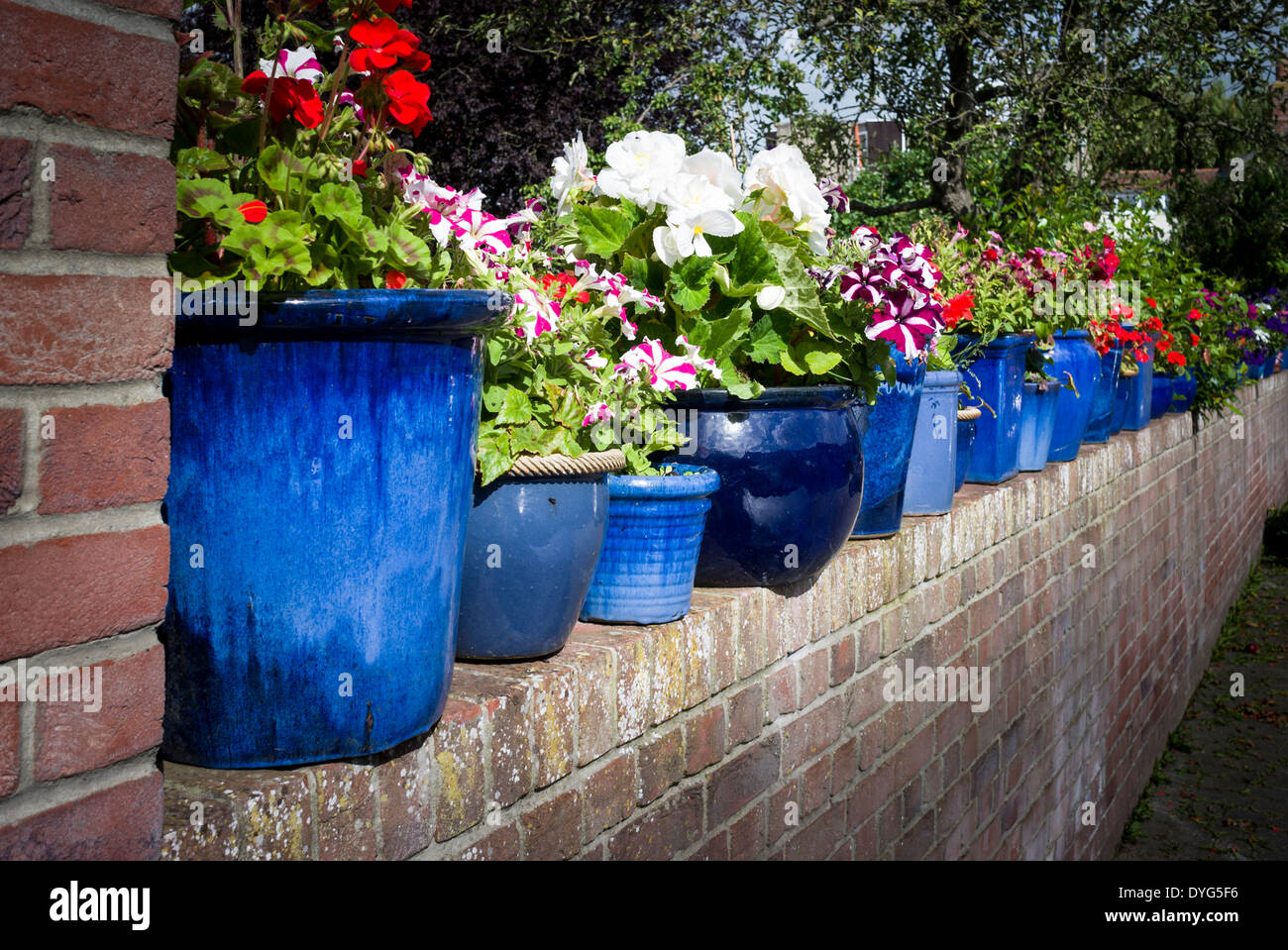 a line of blue planters with flowers atop a brick wall in. Black Bedroom Furniture Sets. Home Design Ideas