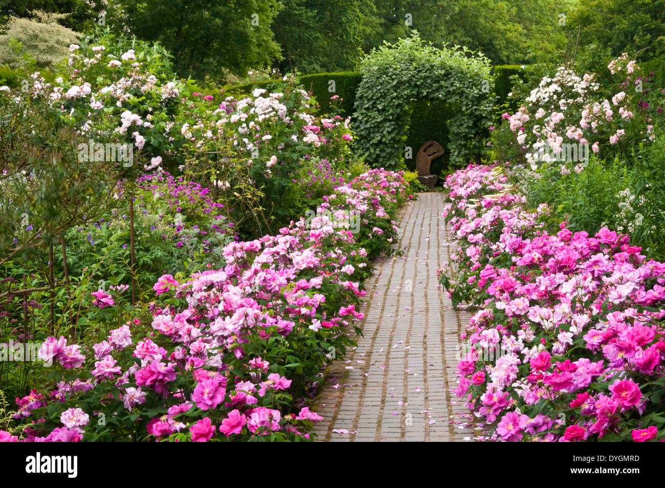 Colourful Roses Line A Brick Paved Path In The Rose Border