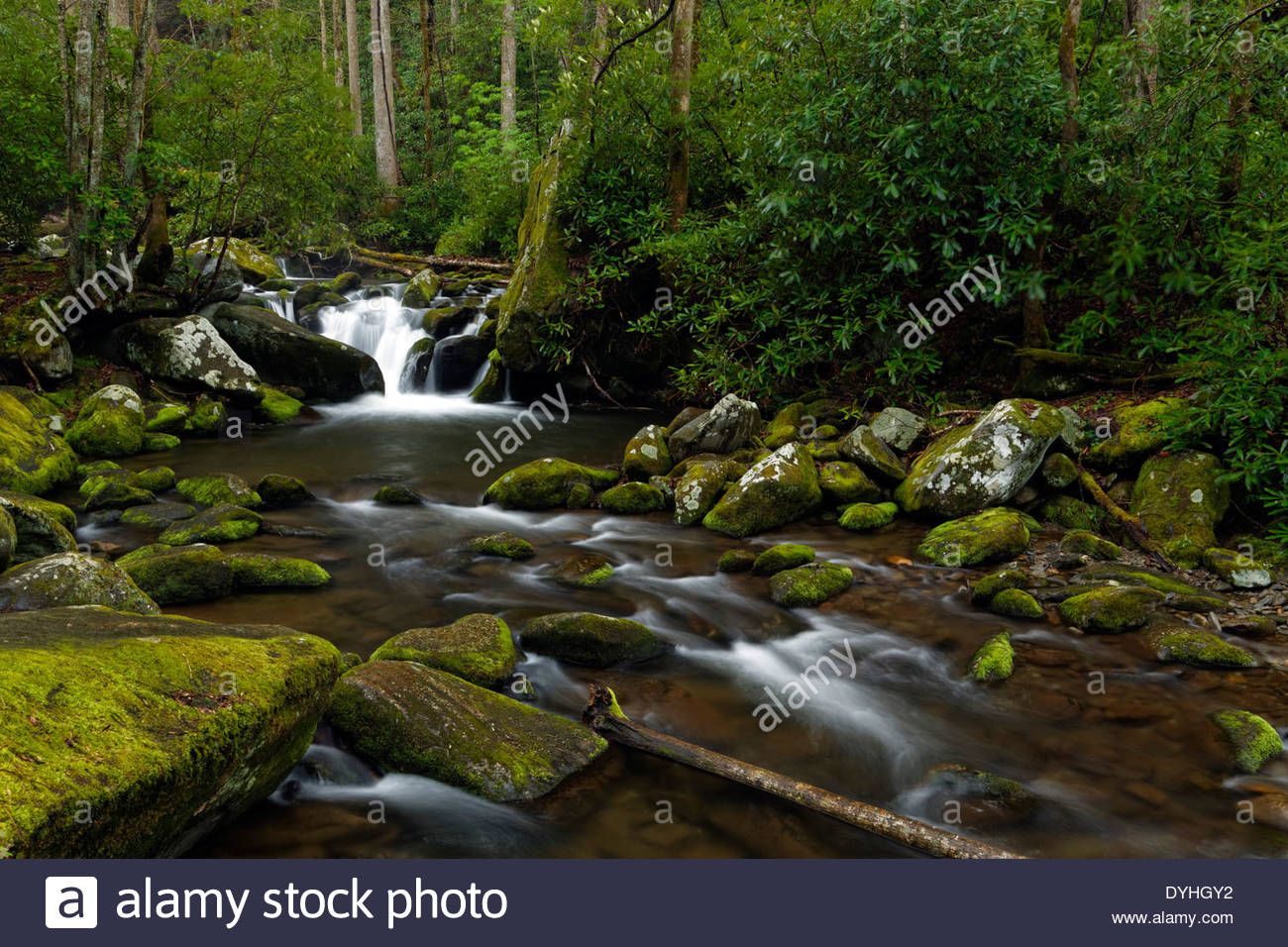 Mountain stream along roaring fork motor nature trail for Roaring fork smoky mountains