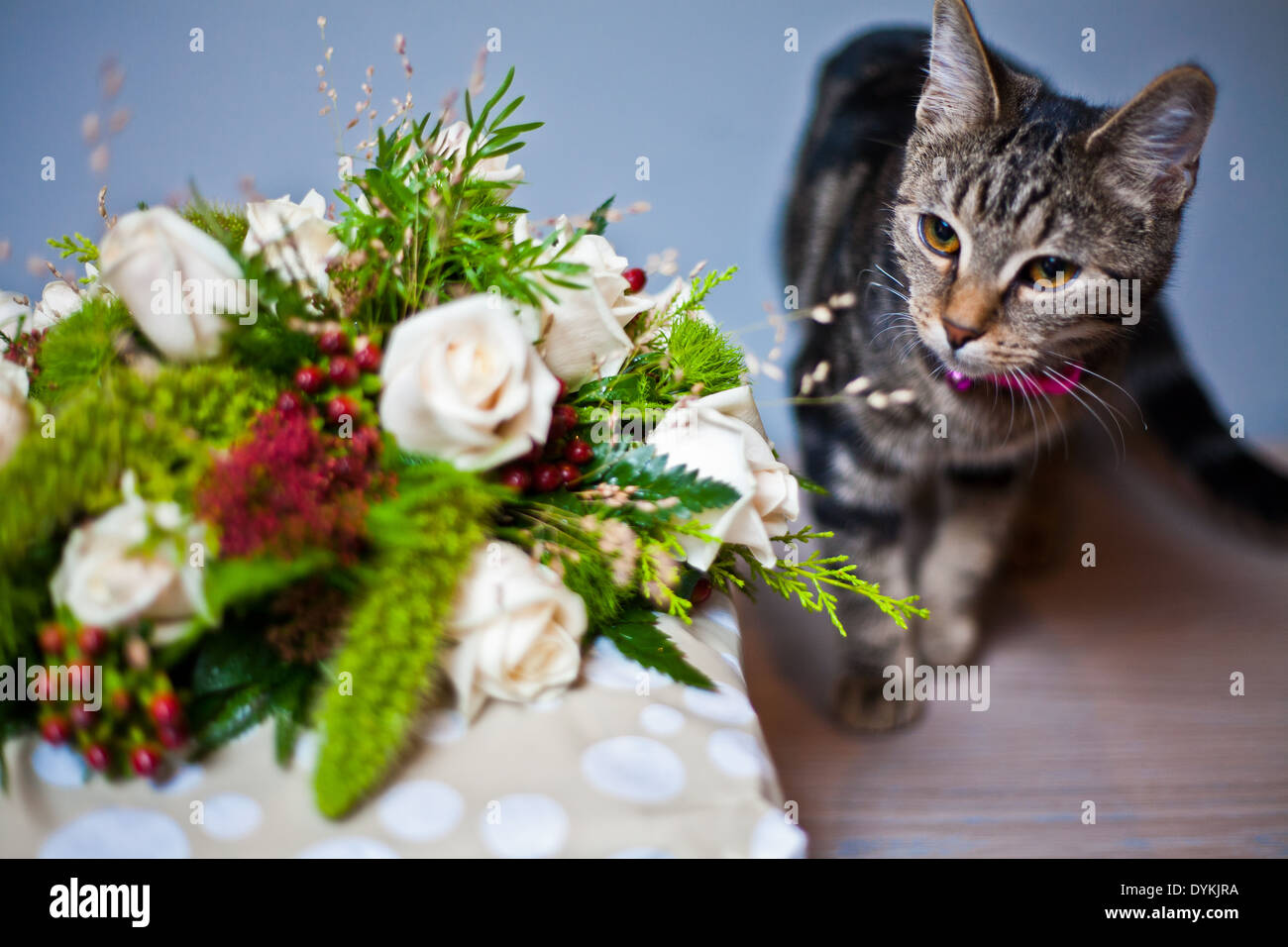 Cat Bouquet - Cute Cat 2017