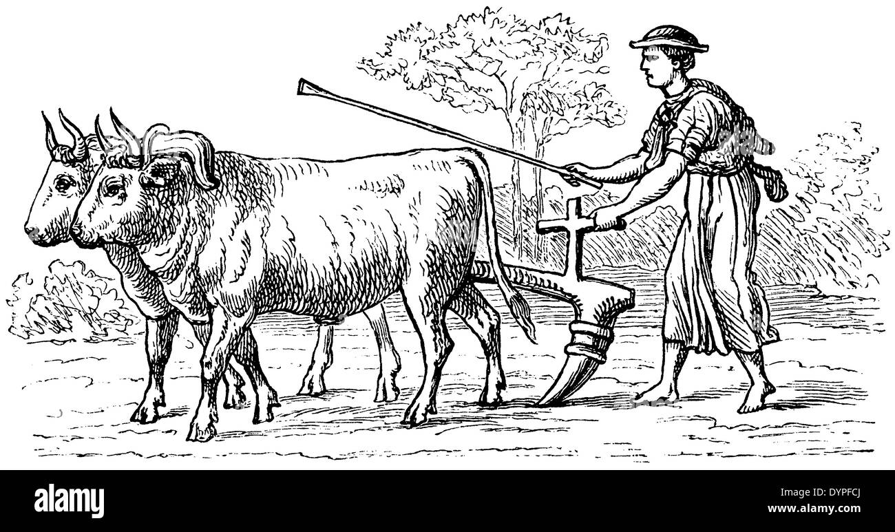 wooden plow drawn by oxen in ancient rome stock photo royalty