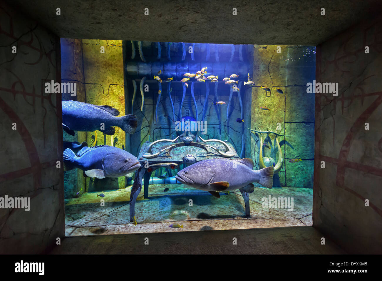 Fish aquarium in uae - Exotic Fish In A Beautifully Designed Aquarium At The Atlantis The Palm Hotel In Dubai United Arab Emirates Uae