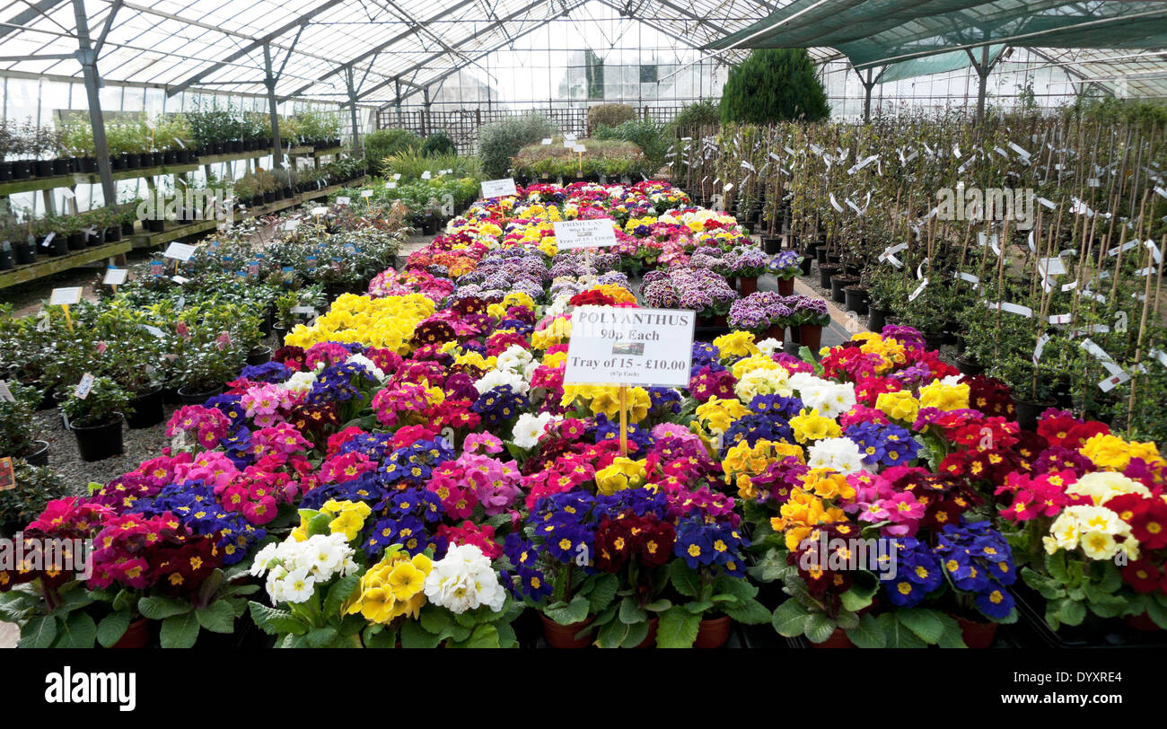 Spring flower display of bedding plants in a for Garden trees england
