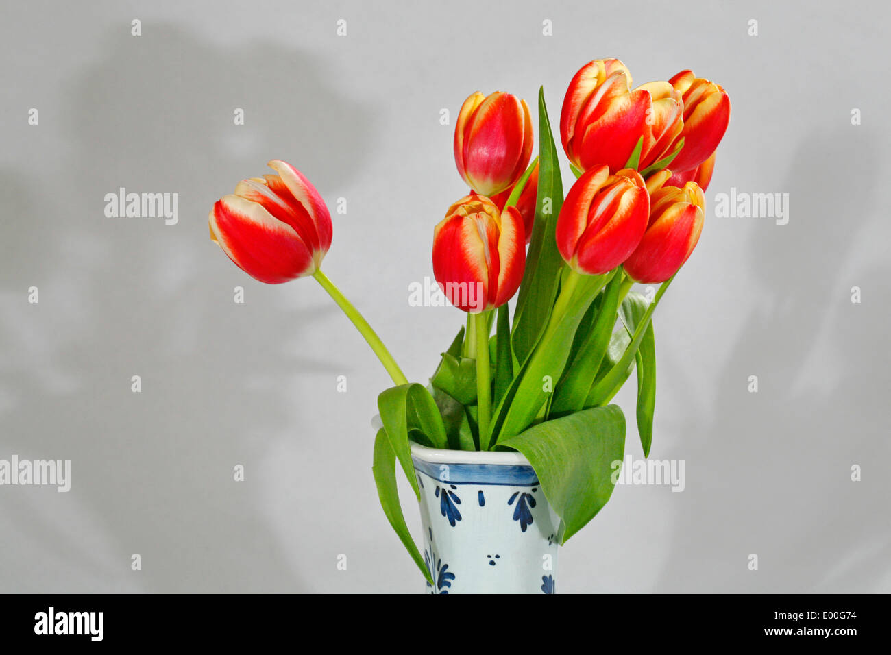 Red and yellow dutch tulips in a blue and white dutch delft china red and yellow dutch tulips in a blue and white dutch delft china vase reviewsmspy