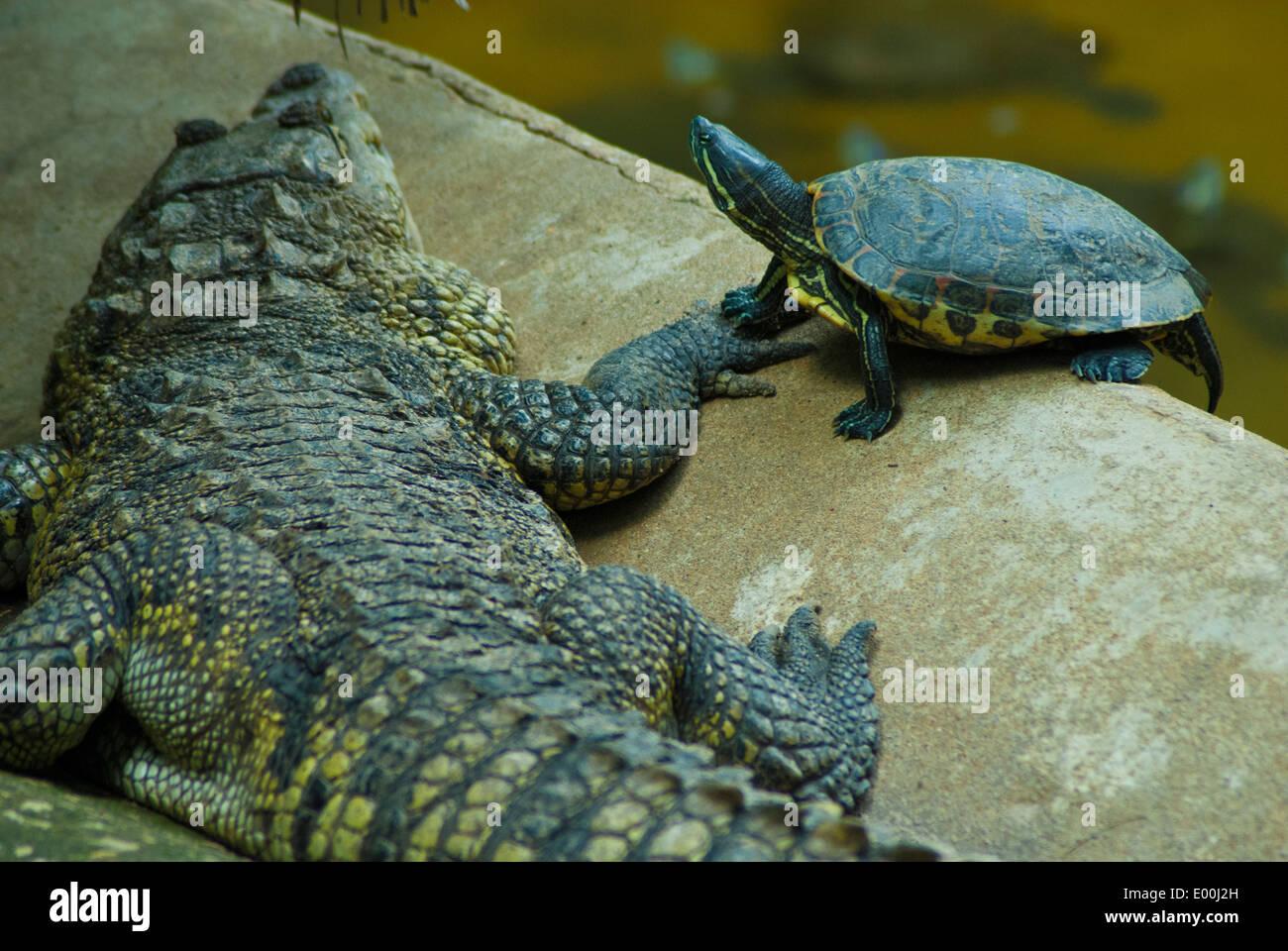 Foto De Parque Museo La Venta Villahermosa: Mexico, Tabascan Capital Of Villahermosa, Parque Museo La