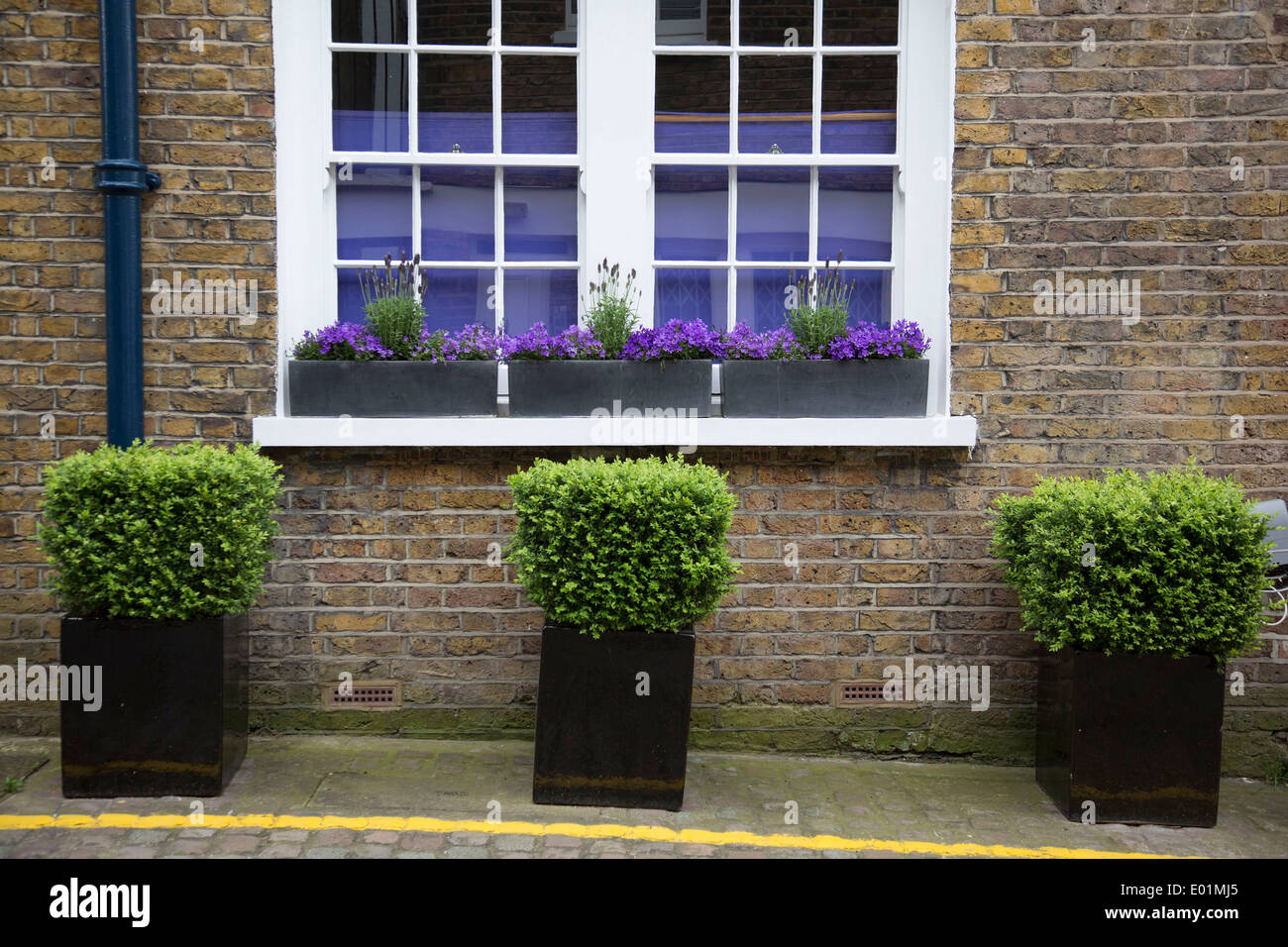 Three Small Potted Bushes Outside The Front Of A House On