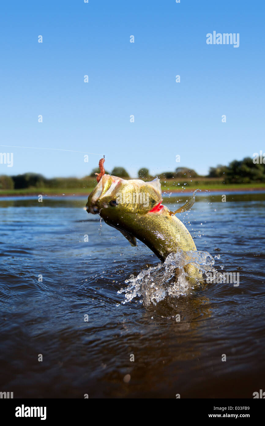 bass fish jumping out of water