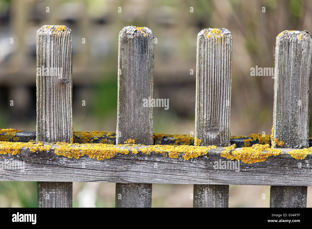 Wood guards fence detail with lichens covered and faded Holz