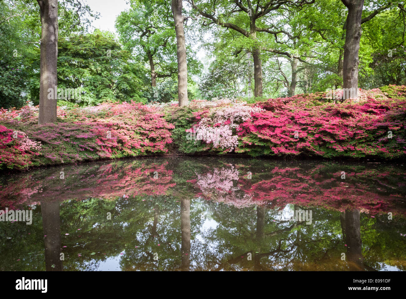 One of the ponds in the isabella plantation richmond park stock image