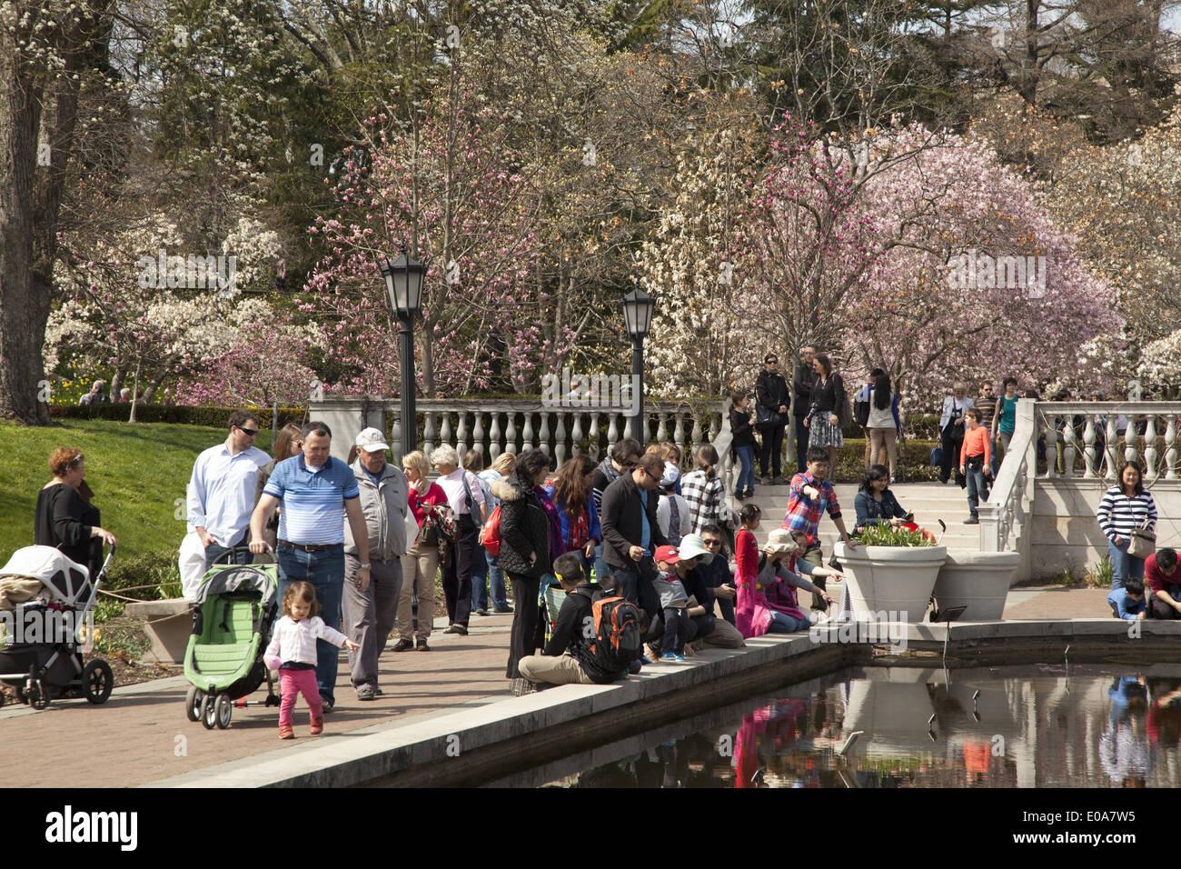 People Enjoy A Beautiful Spring Day In Magnolia Plaza At The Brooklyn  Botanic Garden, Brooklyn, NY