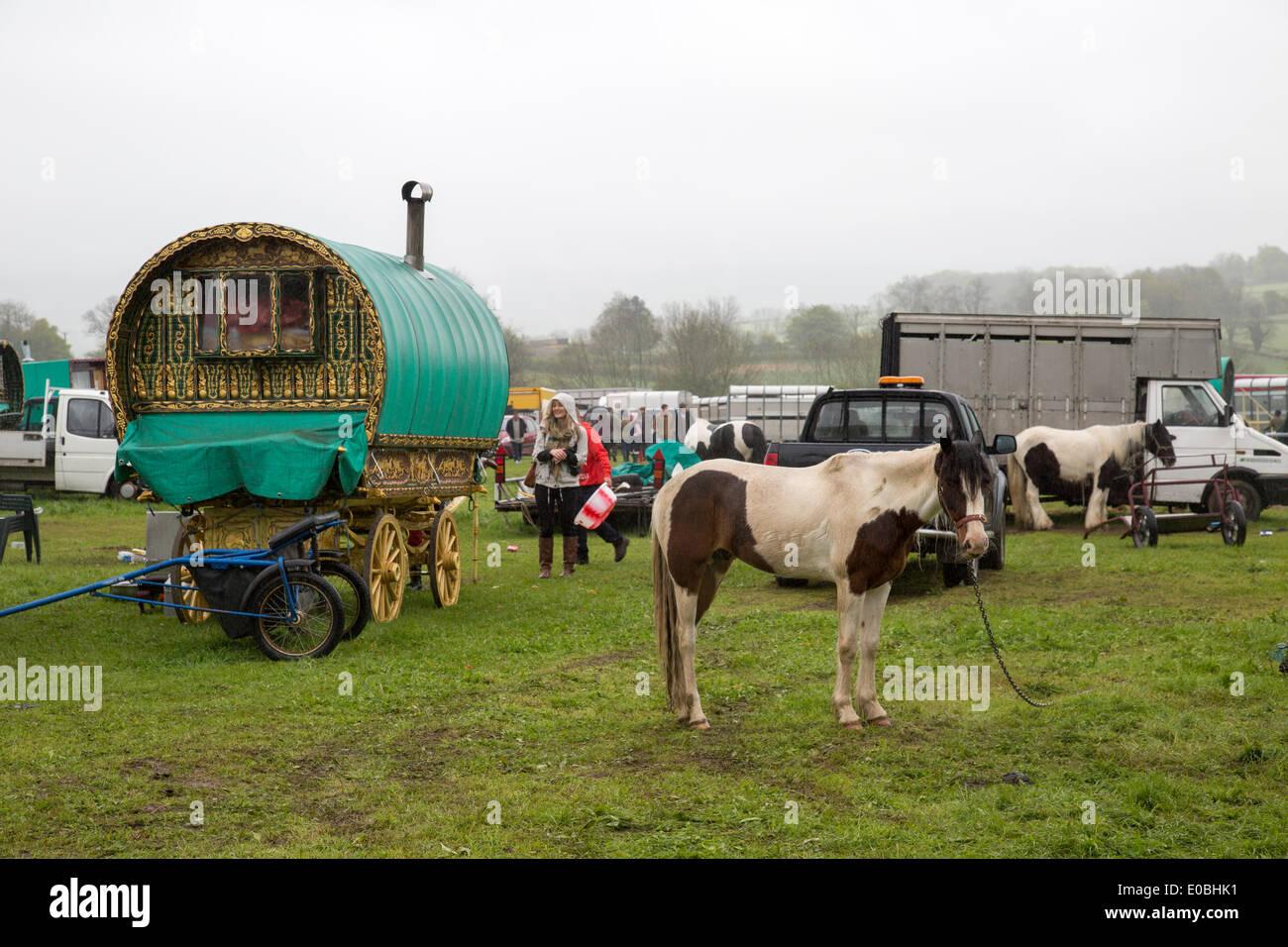 Gypsy horse Fair Horsmonden Stock Photo, Royalty Free Image ...