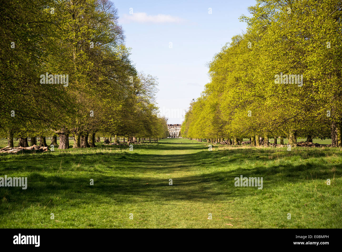 Avenue Of Beech Trees Leading To Hampton Court Palace Home Park Surrey England London UK