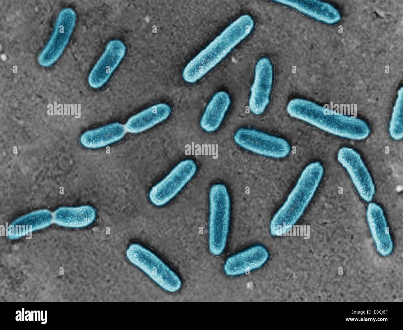 pseudomonas aeruginosa stock photo, royalty free image: 69119191, Skeleton