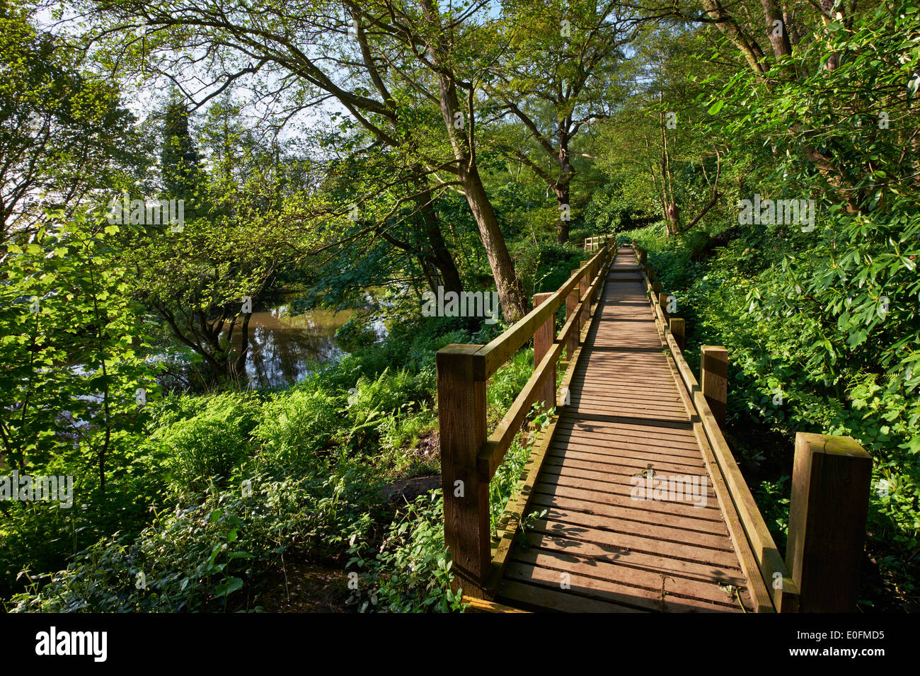 Raised walkway by the River Mole on West End Common. Esher Surrey England & Mole West Stock Photos u0026 Mole West Stock Images - Alamy