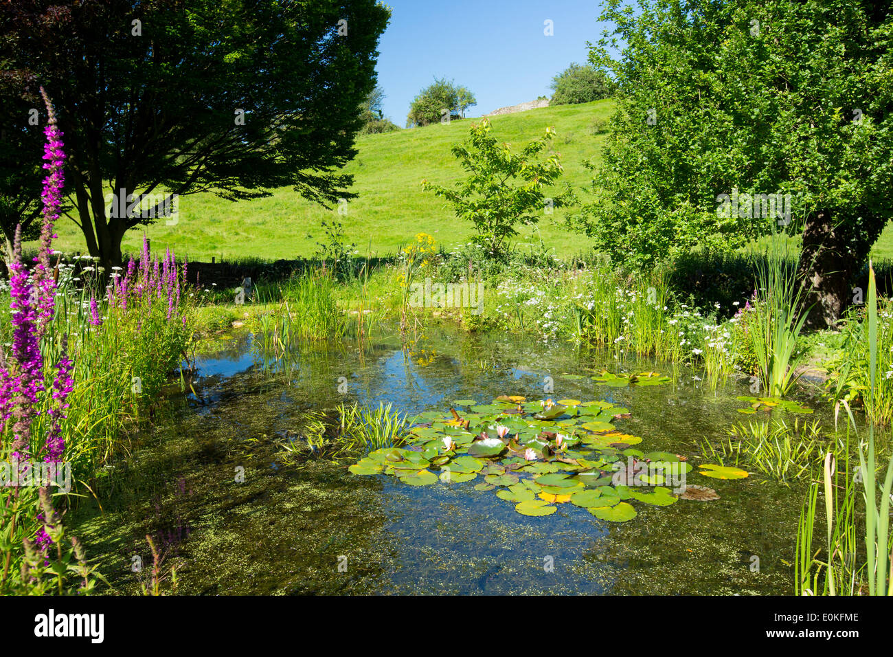 Wildlife pond wildflowers pond plants apple tree and for Garden ponds uk