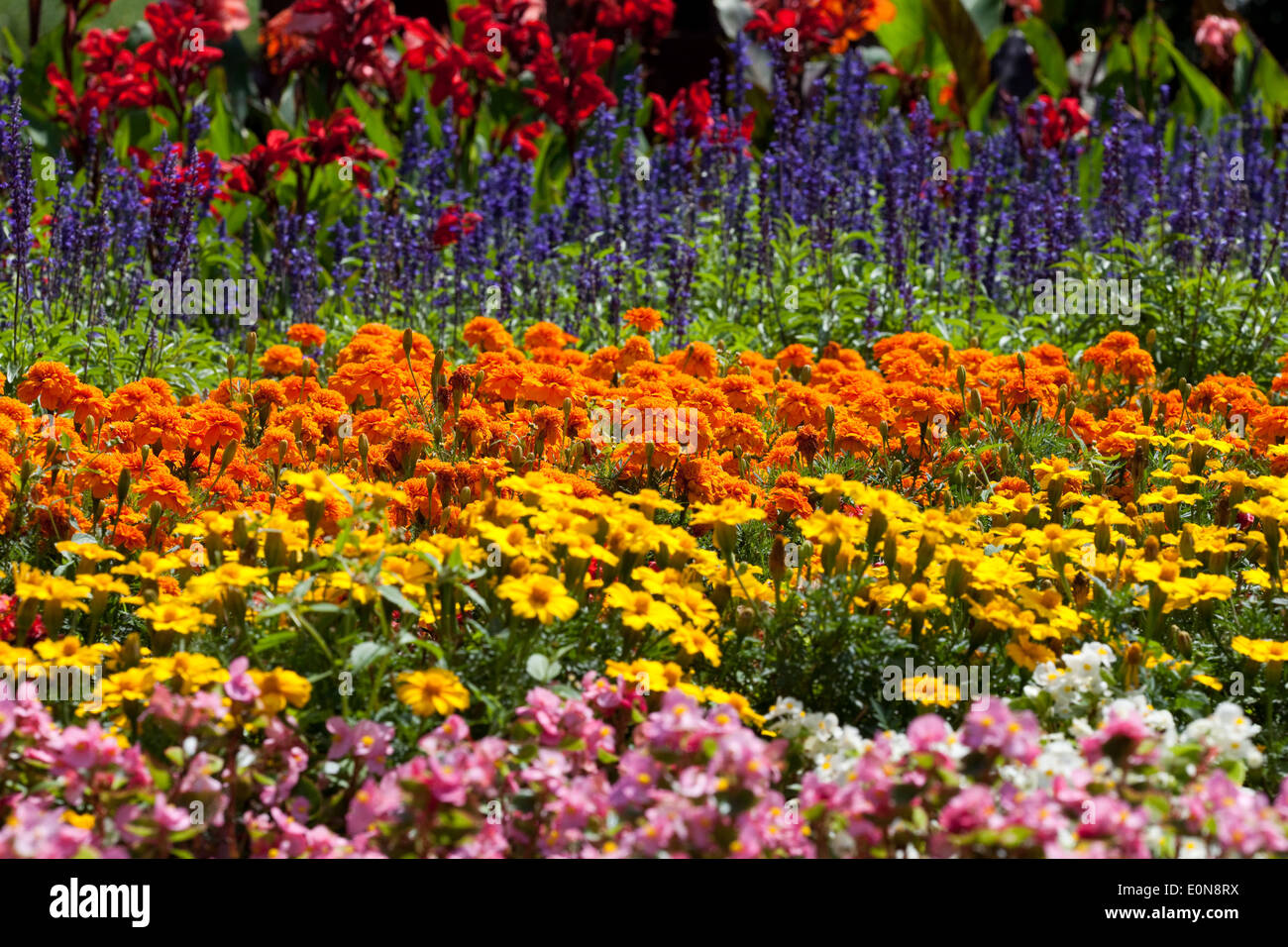 Blumen garten  Blumengarten - flower garden Stock Photo, Royalty Free Image ...