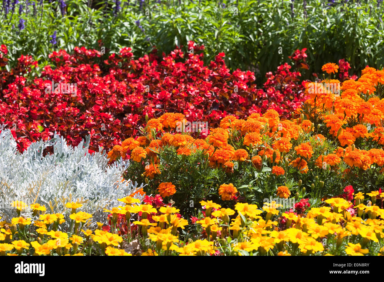 Bilder Blumengarten blumengarten flower garden stock photo royalty free image