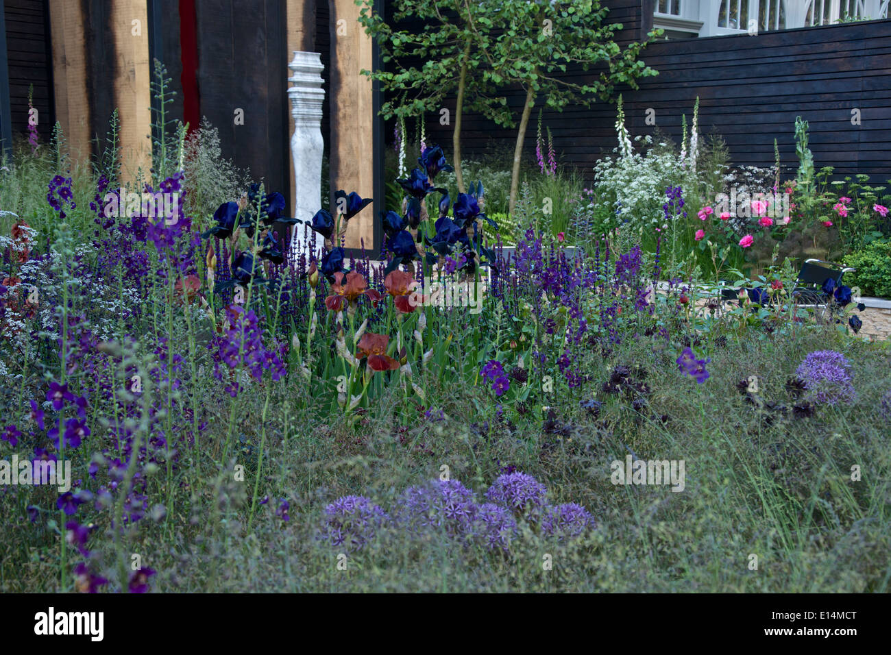 stock photo wine coloured planting in the cloudy bay sensory garden at rhs chelsea flower show 2014