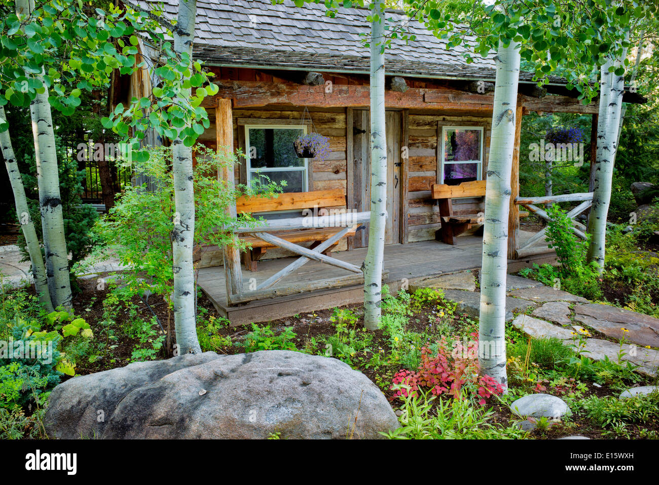 Cabin And Aspen Trees Betty Ford Alpine Gardens Vail