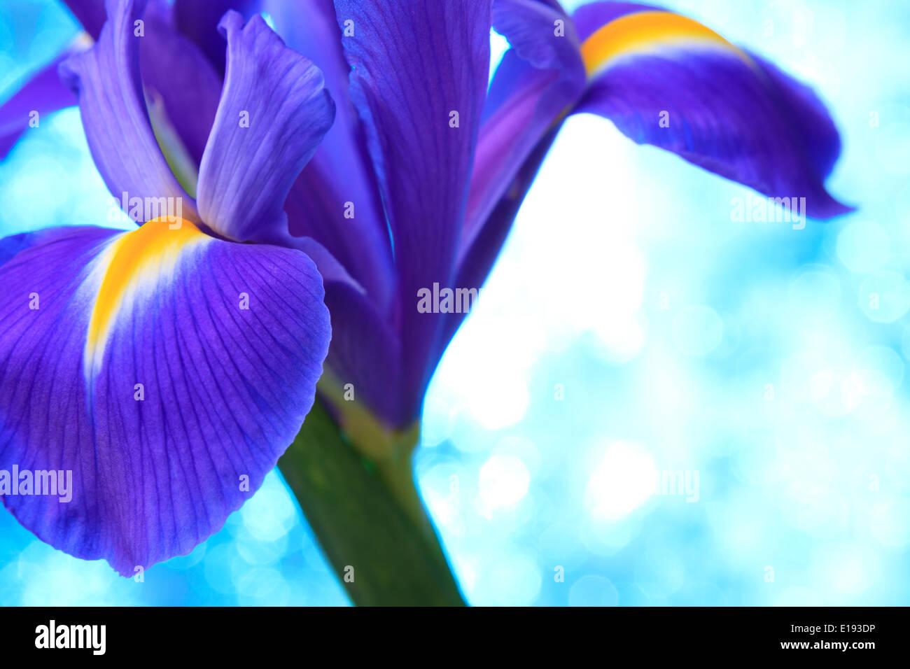 Iris flowers halifax image collections flower wallpaper hd iris flowers halifax choice image flower wallpaper hd iris flowers halifax gallery flower wallpaper hd pic izmirmasajfo