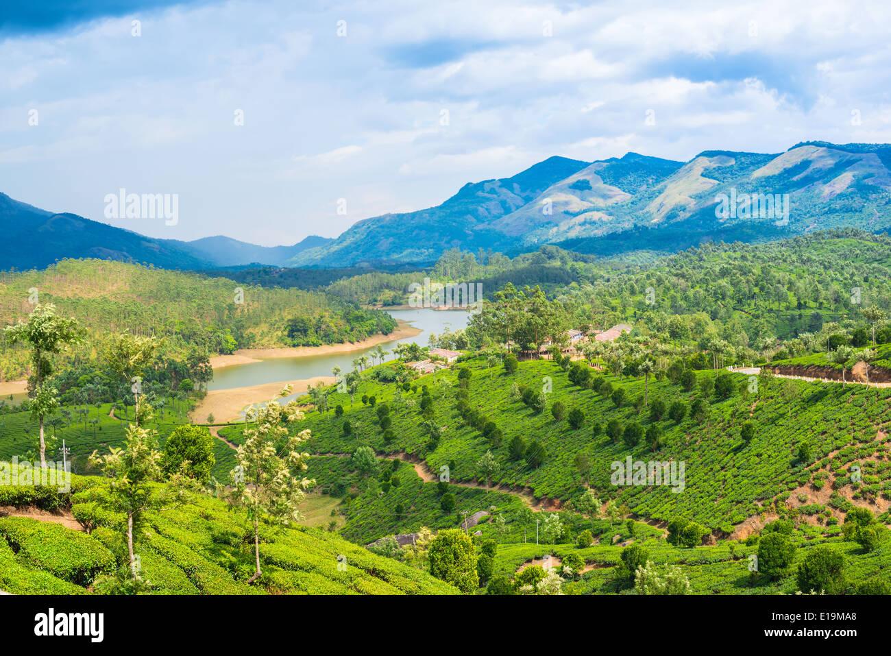 Beautiful Tea Plantations Landscape Vivid View Stock Photo ...