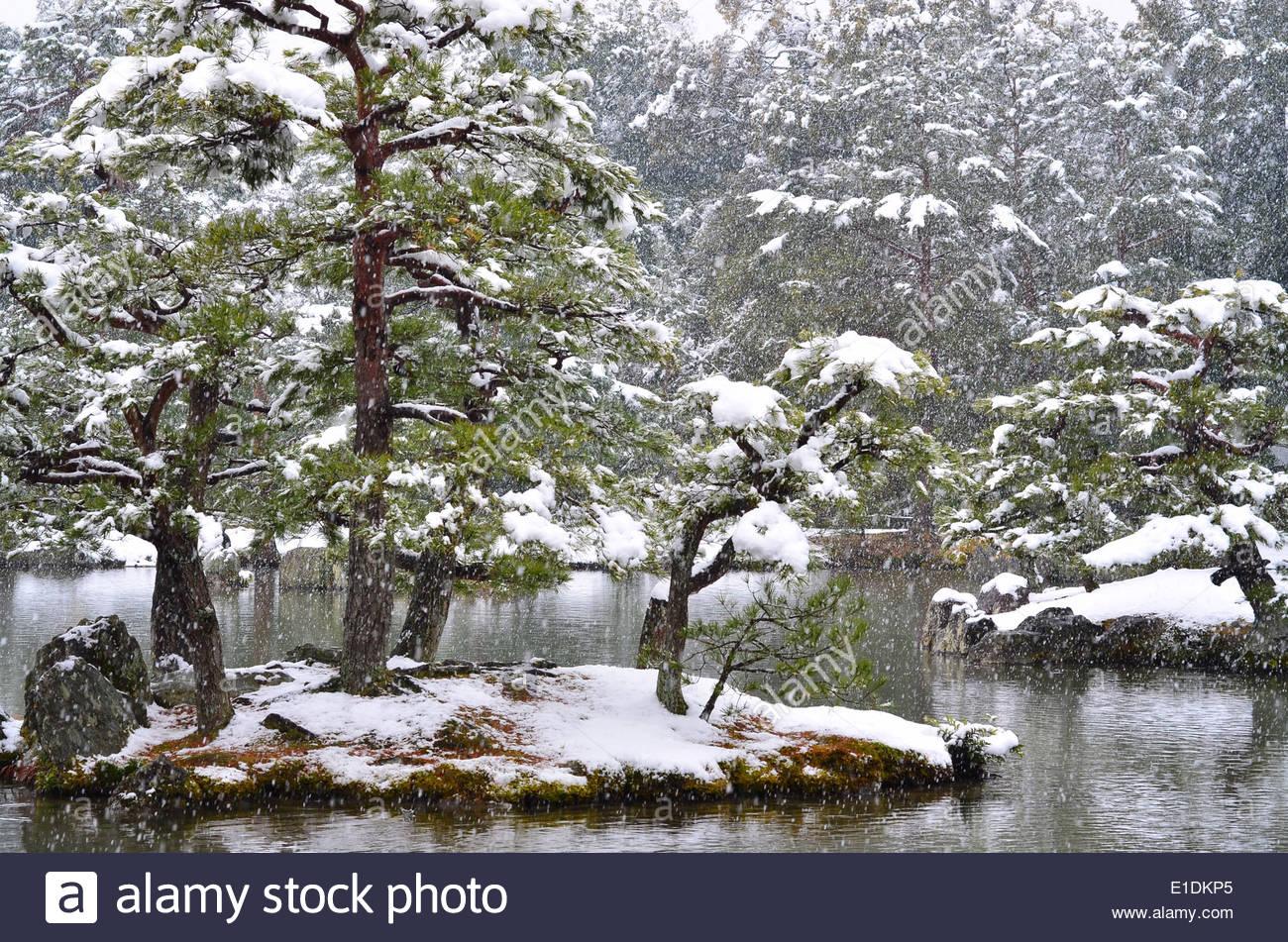 snowy japanese garden pond at kinkakuji temple in kyoto japan
