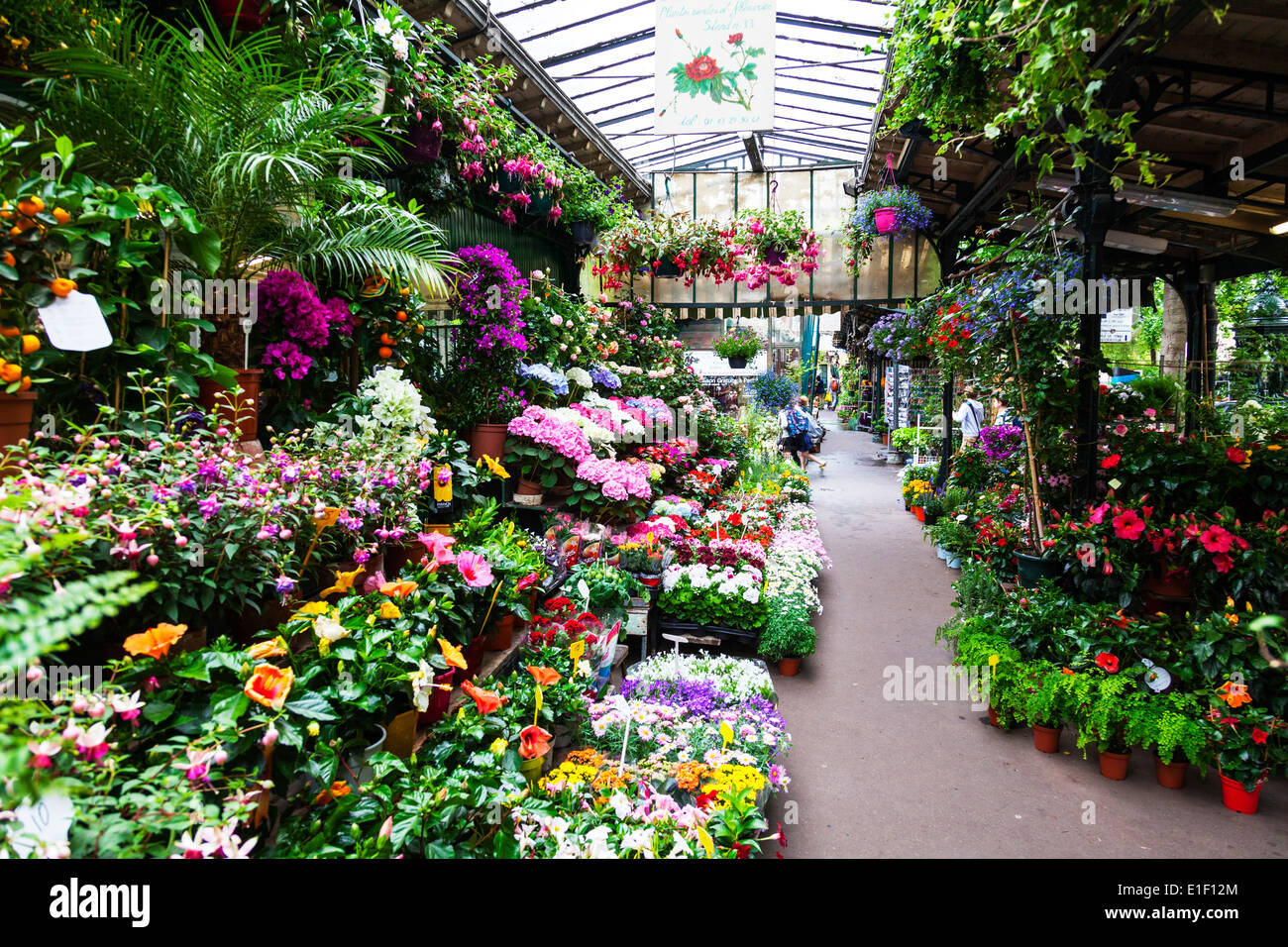 paris the island city flower market ile de la cit march aux stock photo royalty free. Black Bedroom Furniture Sets. Home Design Ideas