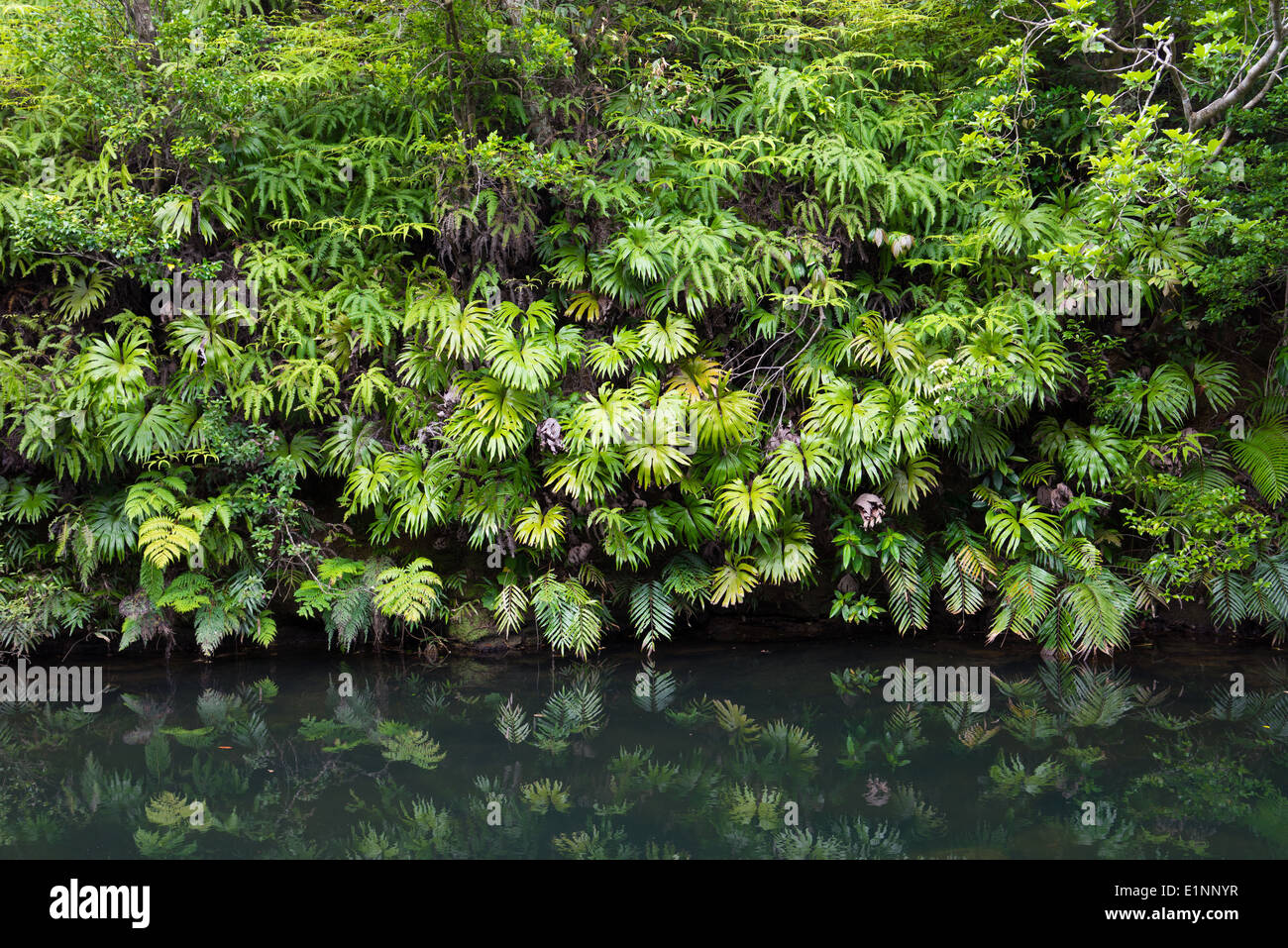 4K AERIAL: Flying Above Beautiful Lush Green Jungle With Palm ...