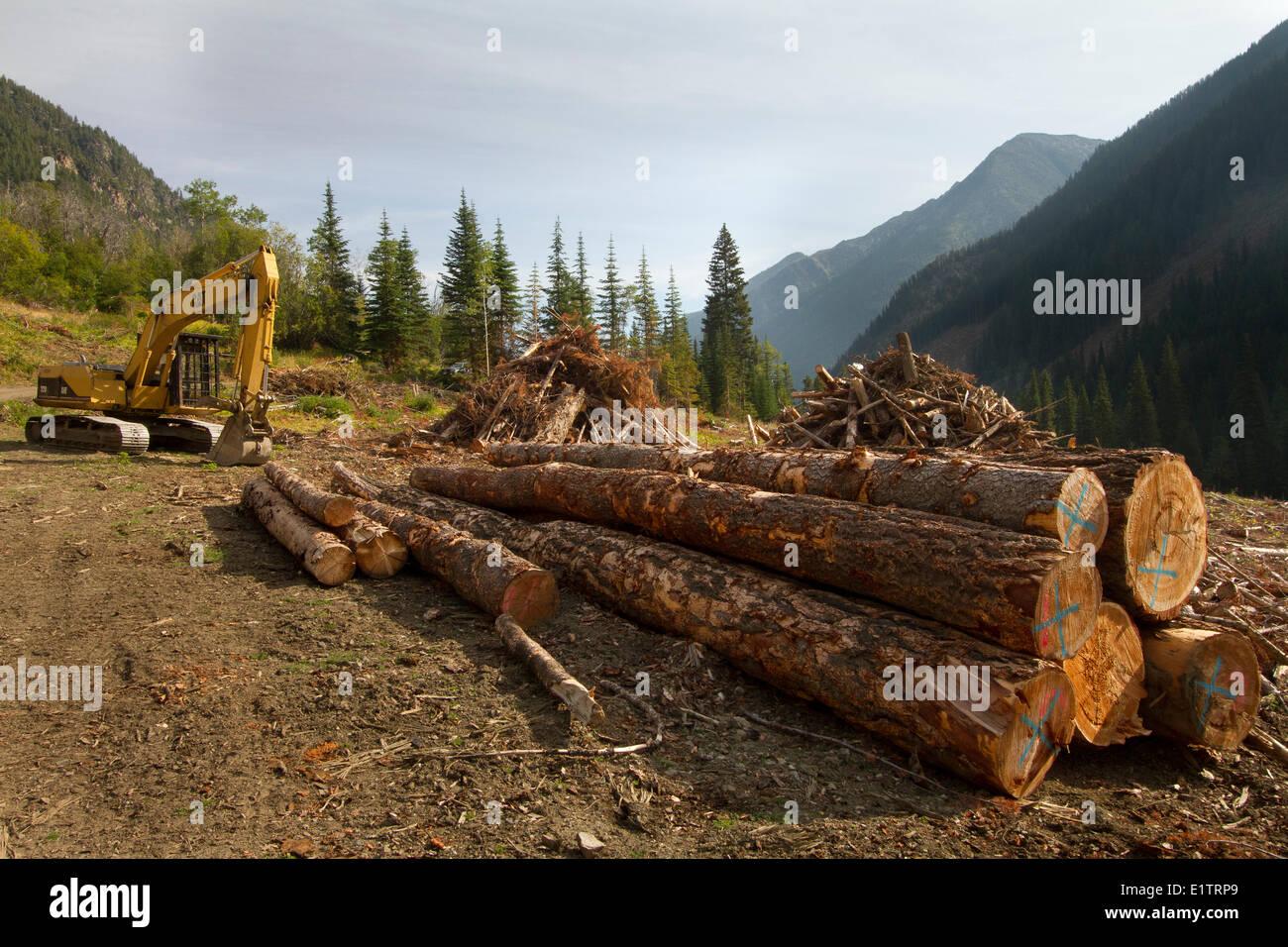 Clearcut Logging, spotted owl habitat destruction, fragmentation ...