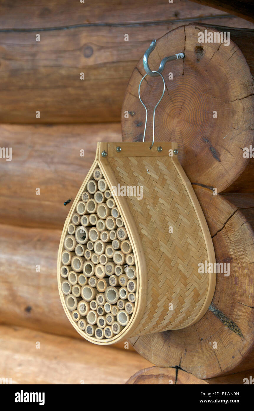 Mason Bee A Species Of Bees In The Genus Osmia Bamboo Tube House