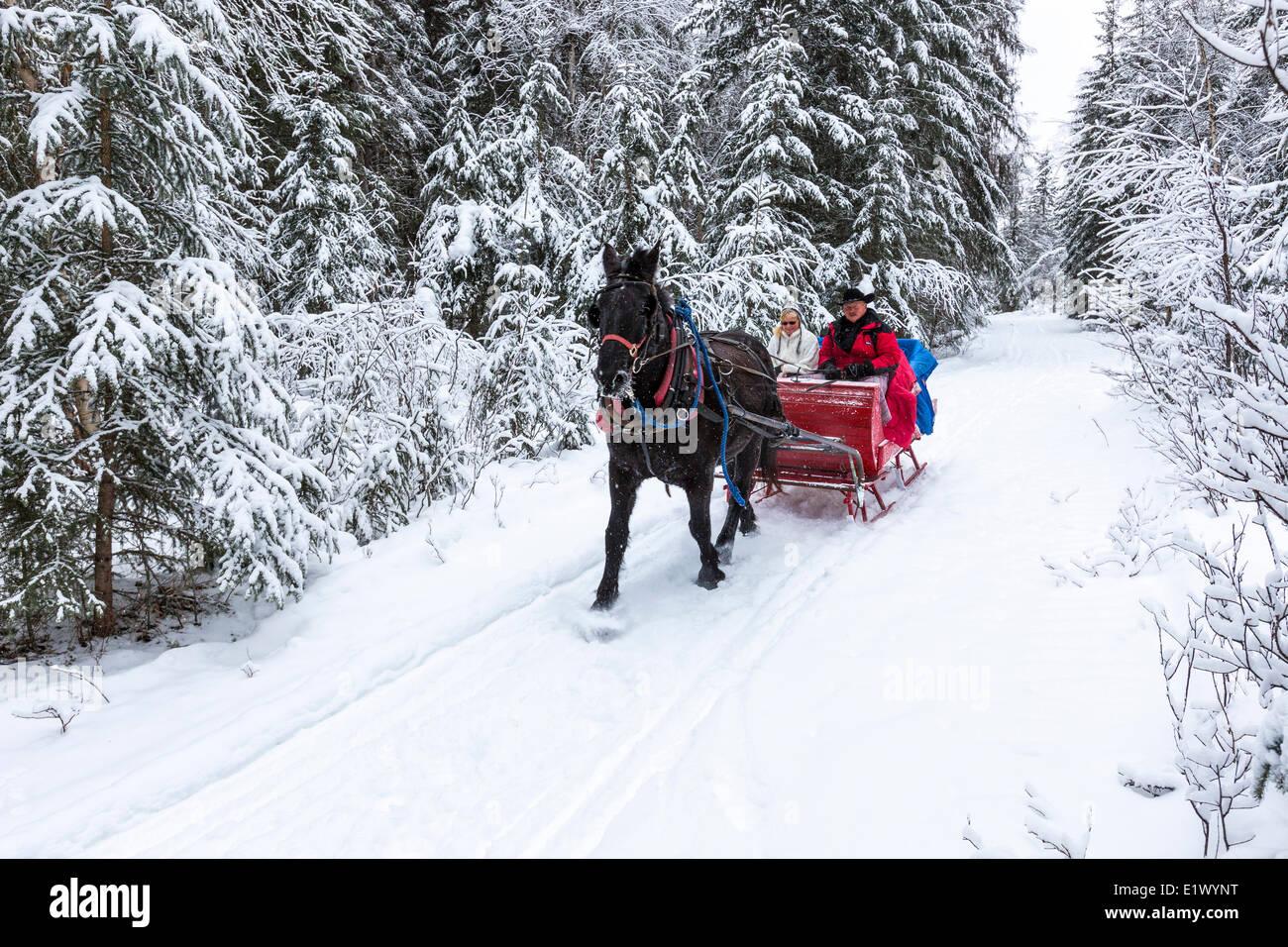 Canada, British Columbia, Cariboo Chilcotin region, sleigh ride ...