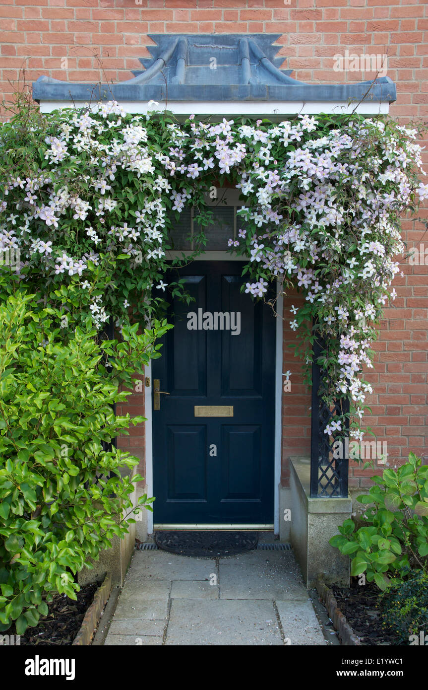 Clematis montana in flower around the navy blue front door and clematis montana in flower around the navy blue front door and porch of a newly built house in poundbury dorchester dorset england rubansaba