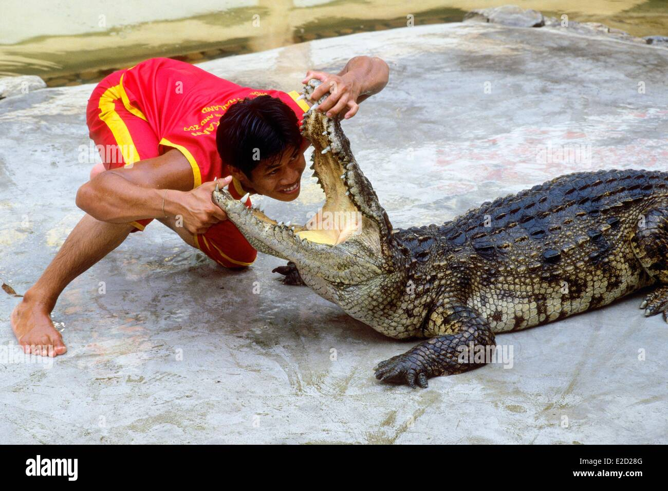 Thailand Bangkok region Samutprakarn Crocodile Farm and Zoo Crocodile Stock P...