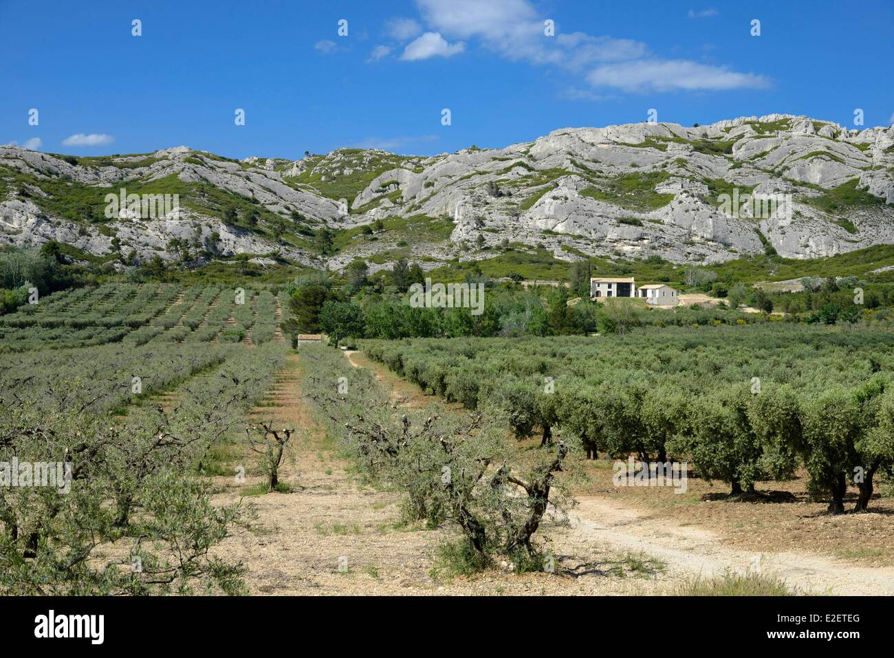 France bouches du rhone maussane les alpilles fields of for Bouch du rhone