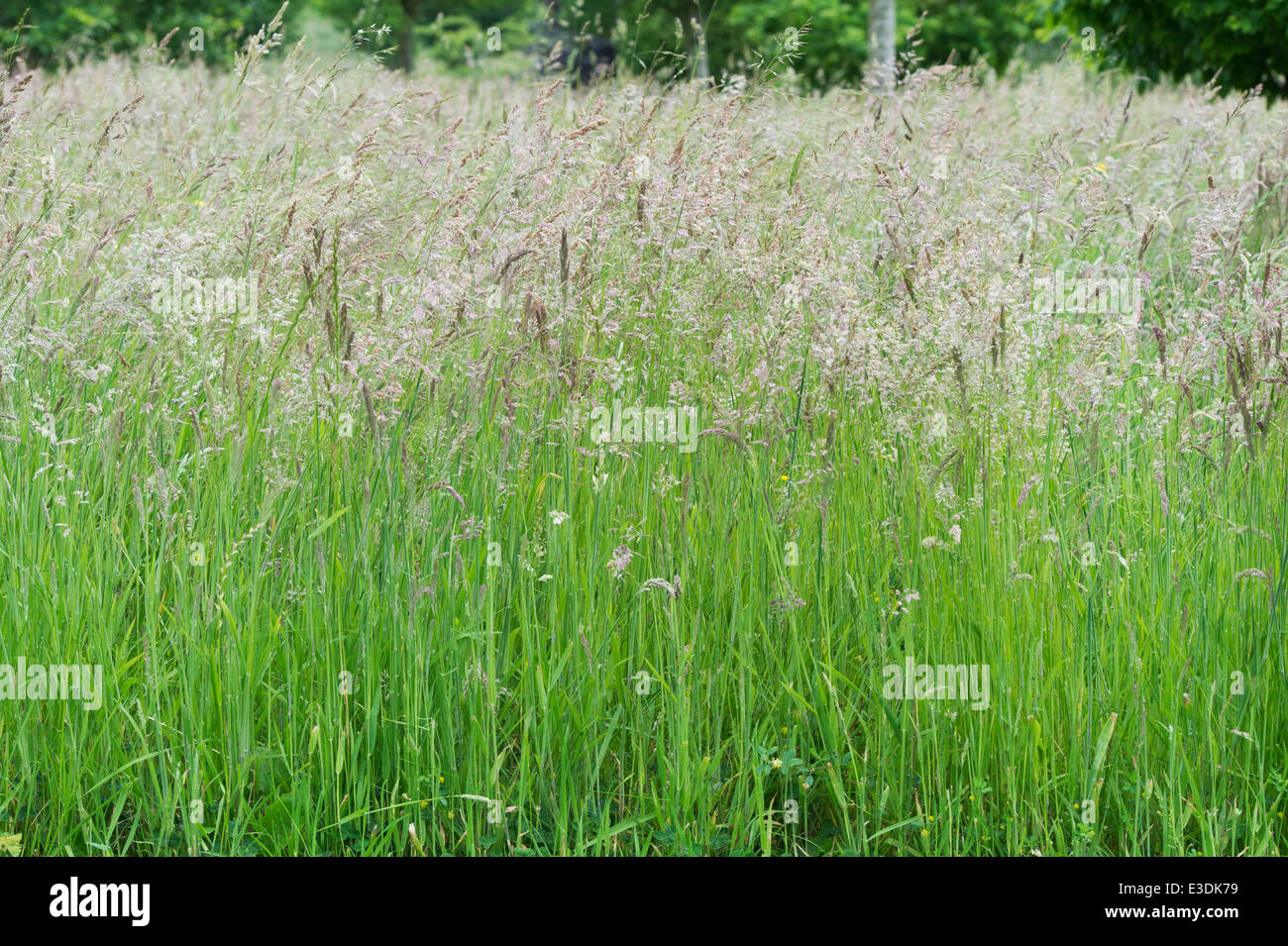 natural wood meadow grass - photo #7