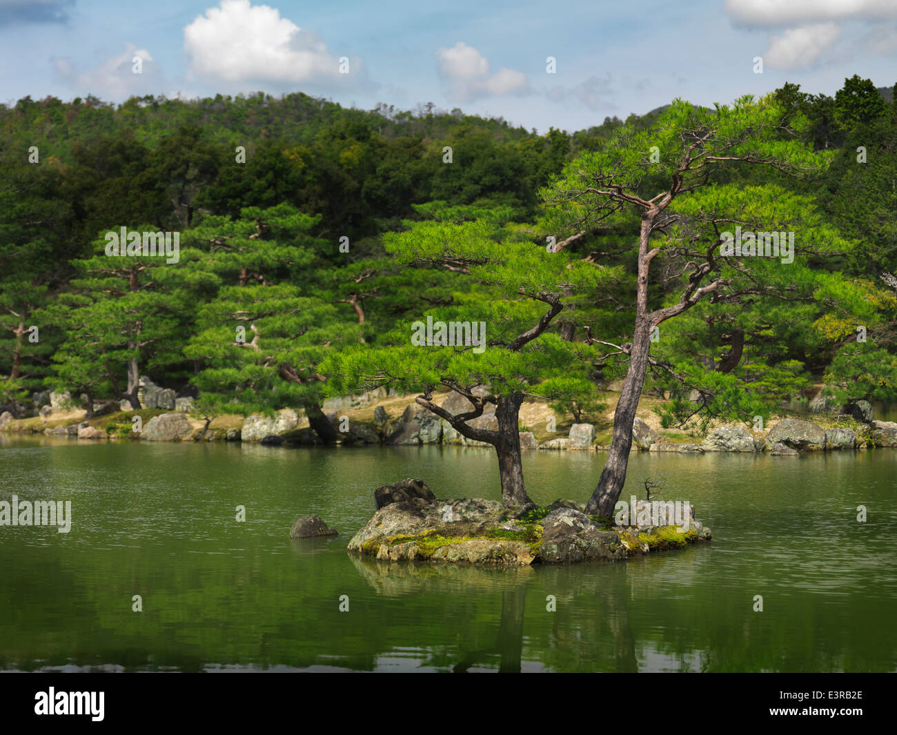 Pine trees at Japanese garden in Kyoto Japan Stock Photo Royalty