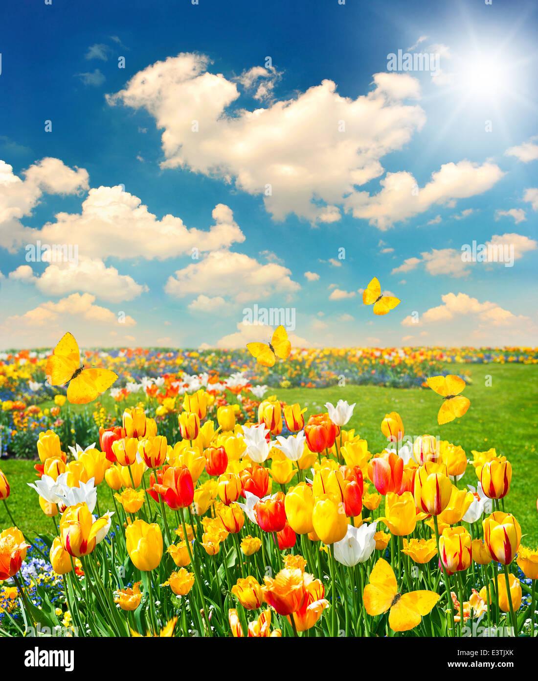Summer Tulip Flowers Fields Sun Rays Morning Dawn 2560x1600 ...