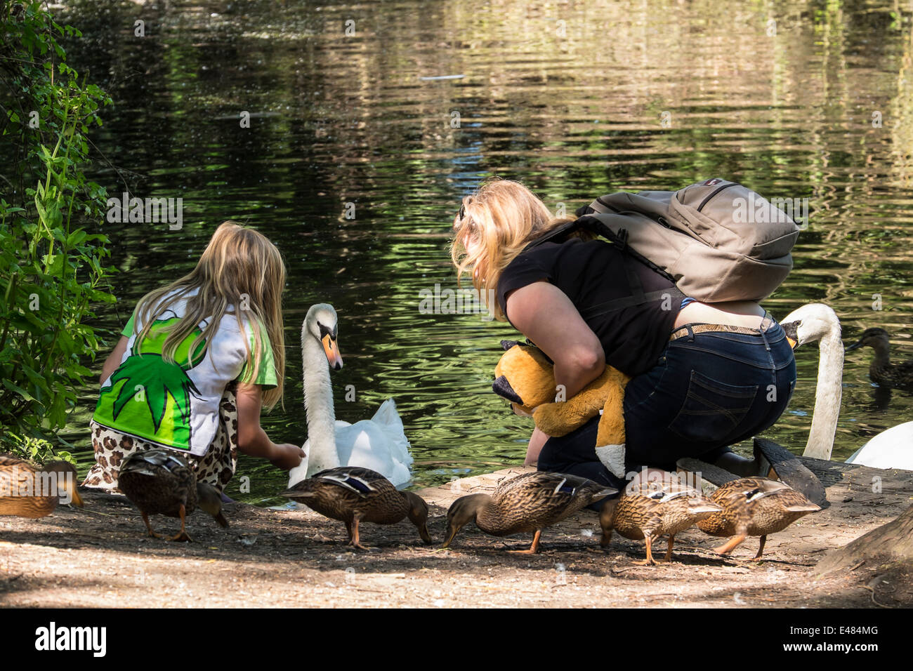 feeding-the-swan-milton-cambridge-englan
