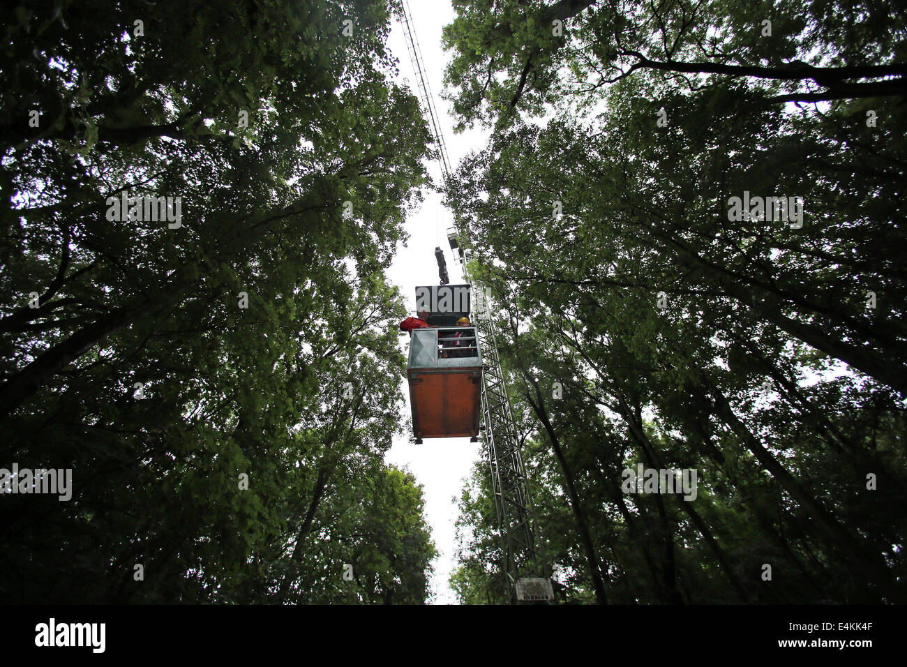 Scientists of Leipzig University travel in a small canopy crane across the Auwald near Leipzig Germany 9 July 2014. A year after the canopy crane was ... & Scientists of Leipzig University travel in a small canopy crane ...
