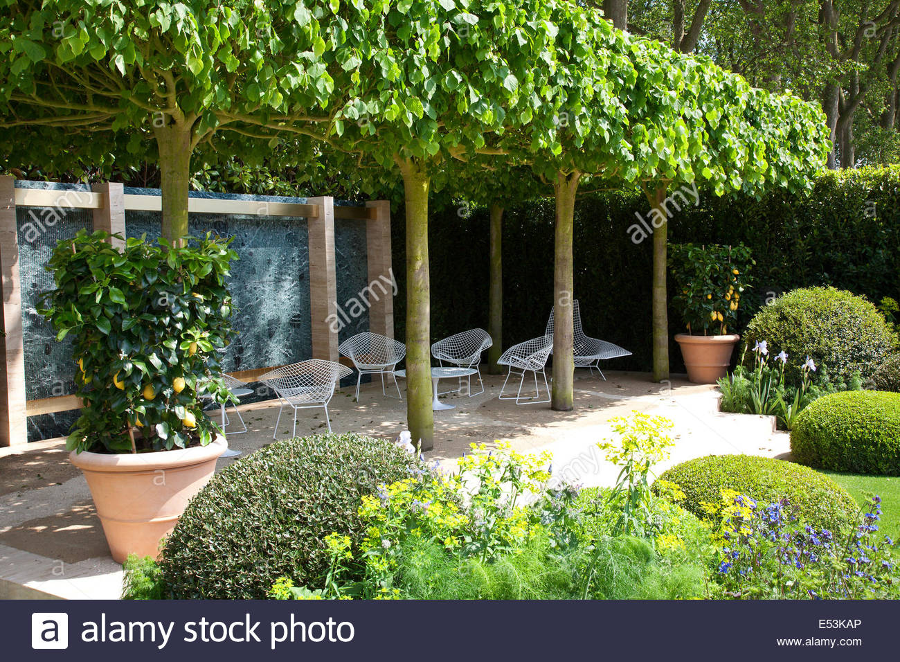 A canopy of Tilia x europaea u0027Pallidau0027 u2013 Lime trees shade a seating area in a contemporary garden & A canopy of Tilia x europaea u0027Pallidau0027 u2013 Lime trees shade a ...