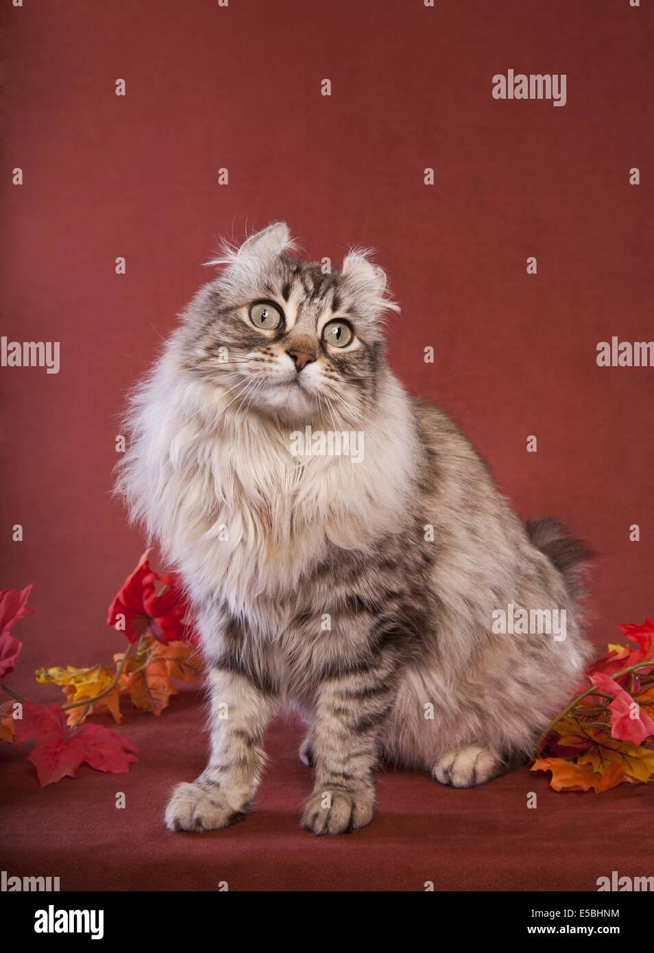 cat lynx autumn foliage - photo #38