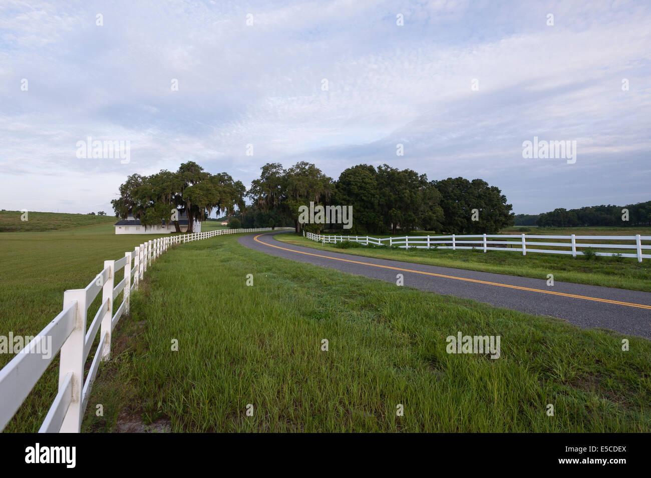 Ocala florida usa countryside farmland landscape stock Usa countryside pictures