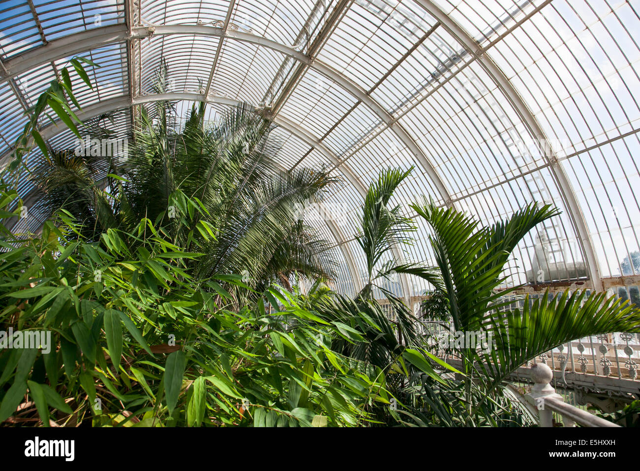 Inside The Palm House At Kew Gardens   London, England   Stock Image