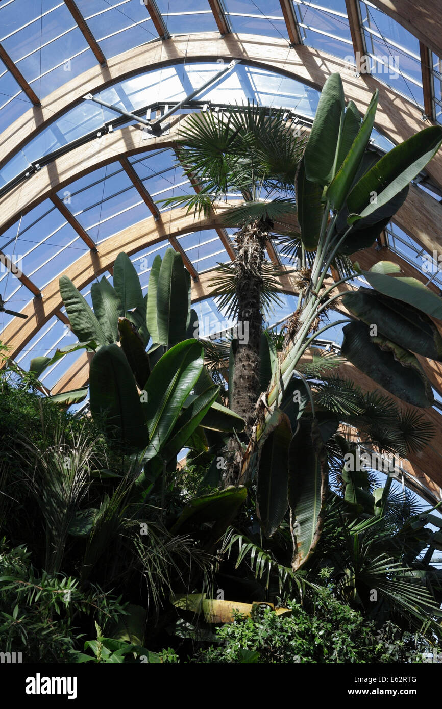 banana plants and tropical plants in the winter gardens sheffield