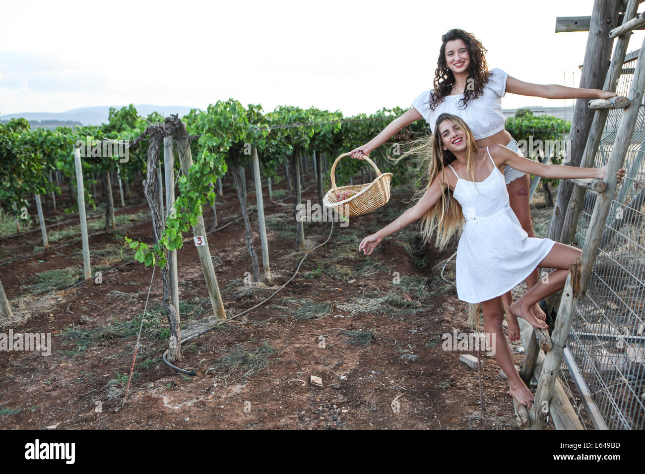 http://c8.alamy.com/comp/E649BD/young-teen-girl-in-white-dress-picks-grape-in-a-vineyard-E649BD.jpg