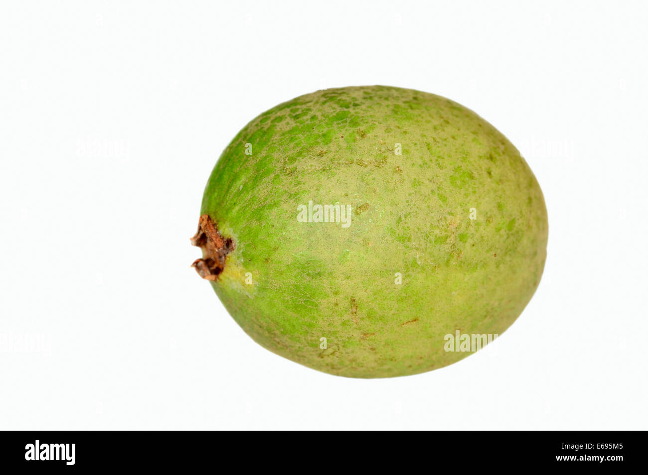 apple guava Find apple guava stock images in hd and millions of other royalty-free stock  photos, illustrations, and vectors in the shutterstock collection thousands of new .