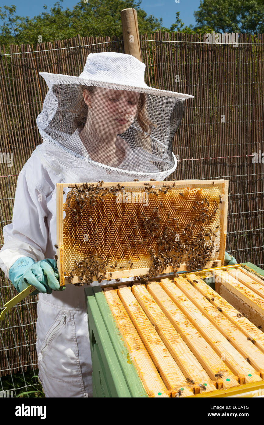 Young Female Beekeeper Holding Frame With Honeycomb From