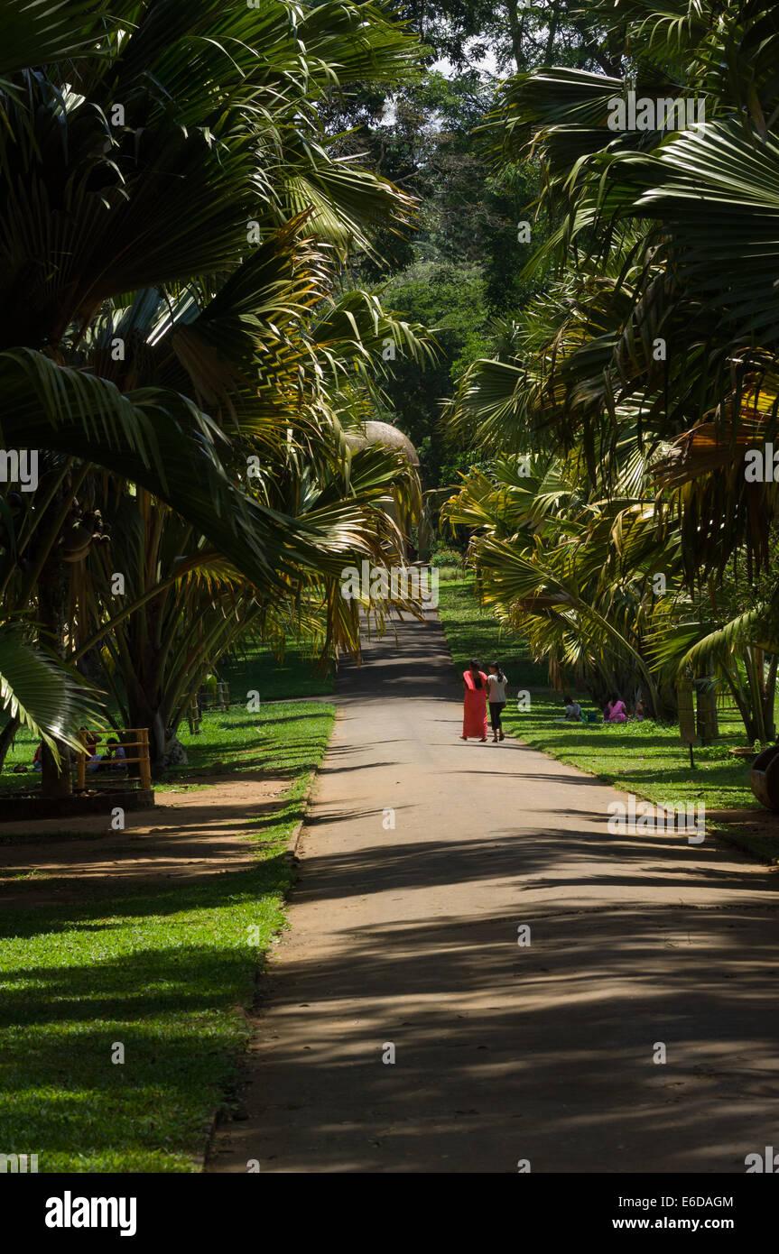 Local Women Walking Down A Shadowy Path At The Royal Botanical Gardens,  Peradeniya, Near Kandy, Sri Lanka
