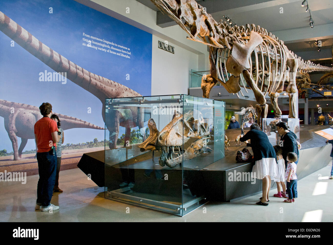 Dinosaur Hall Natural History Museum Los Angeles California - Historical museums in usa