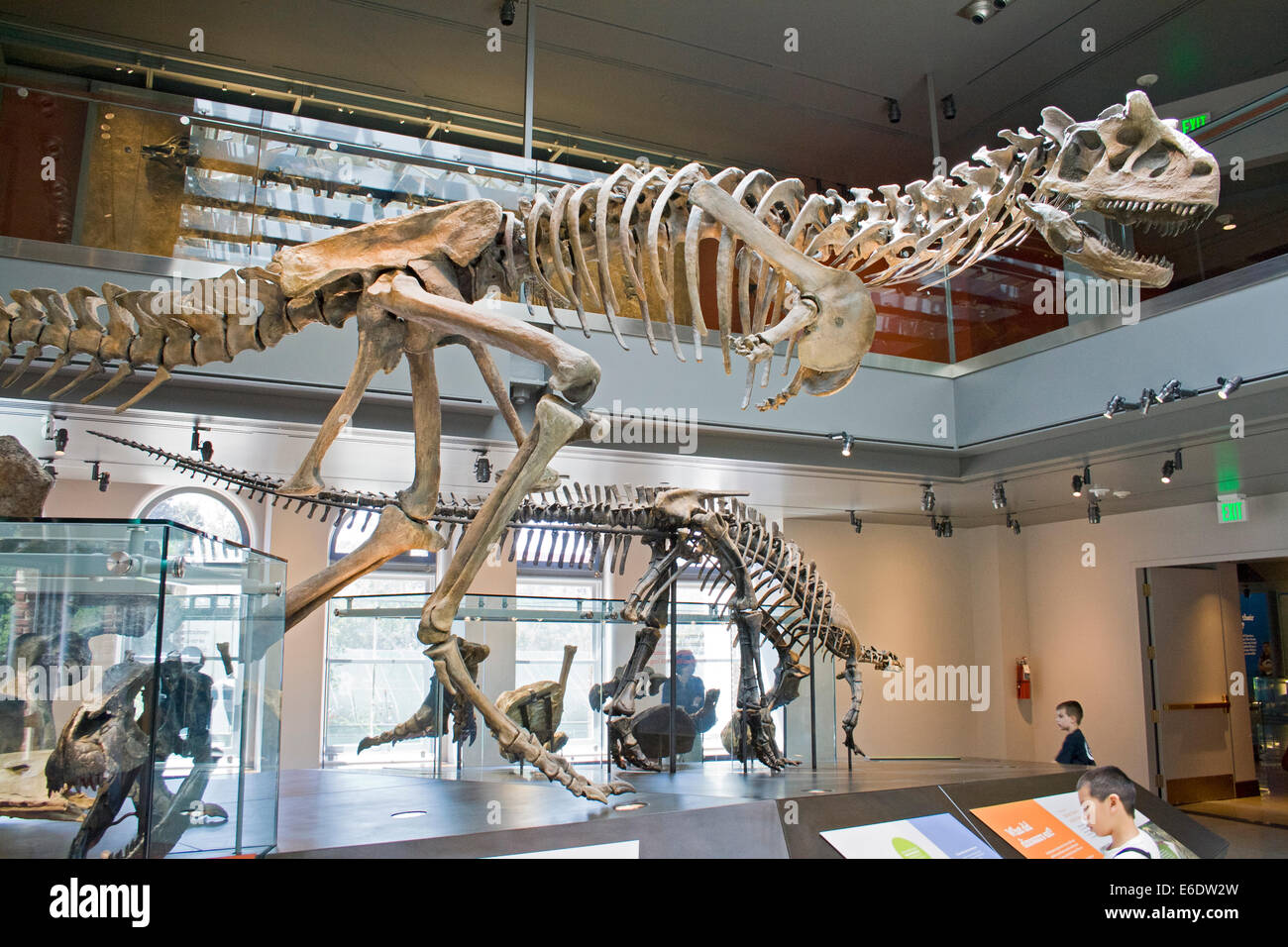 Argentinosaurus Dinosaur Hall Natural History Museum Los - Historical museums in usa
